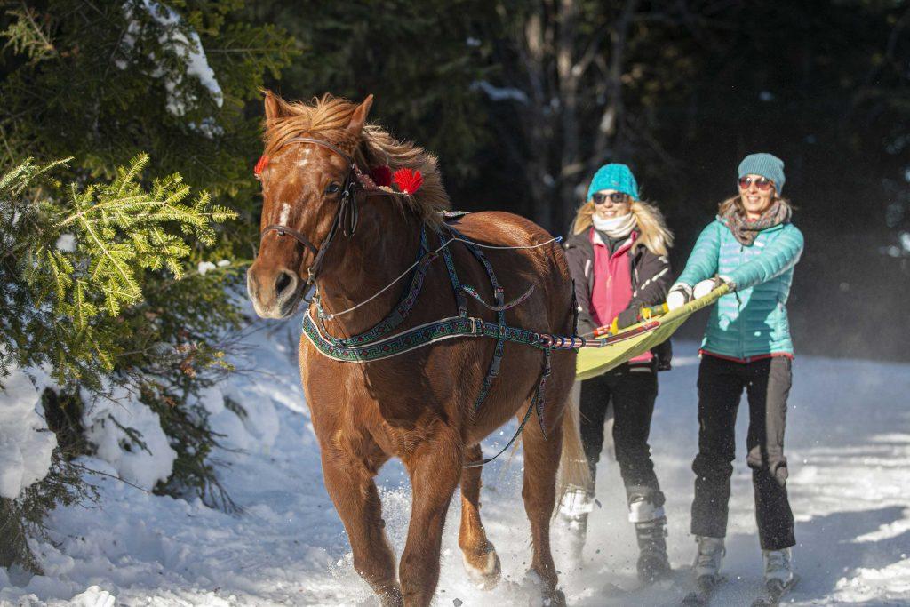 Ski joëring à Chabanon