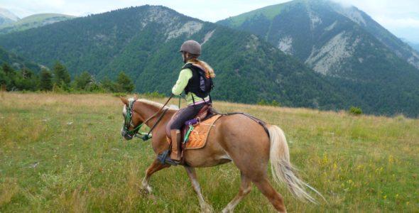 Les chevaux de Roquépine
