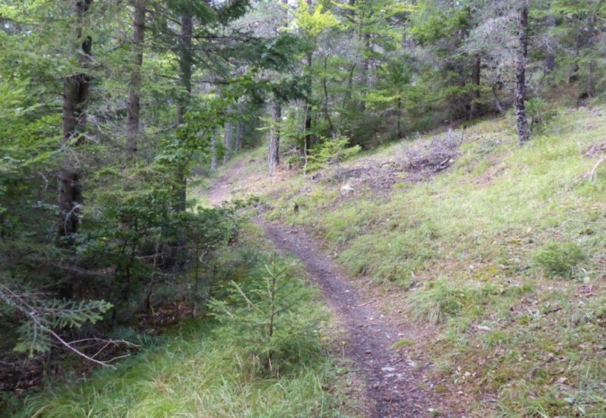 Randonnée la Forestière